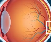 interior Illinois Eye Bank banner image